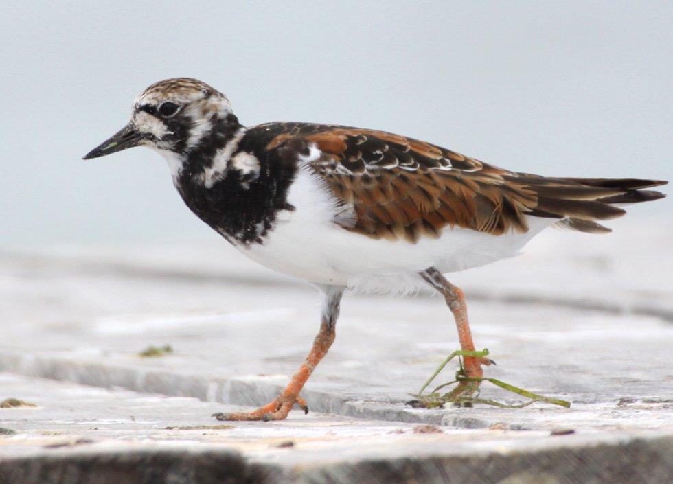 Water Birds Of Rio Lagartos Mexico
