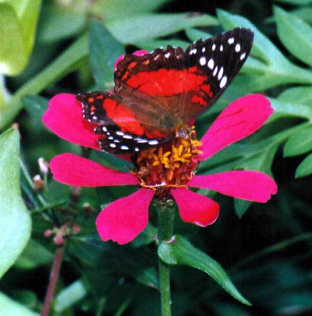 Colorful Butterflies of Trinidad and Tobago
