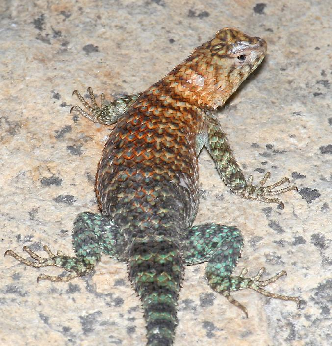 Different Types of Lizards Reptiles