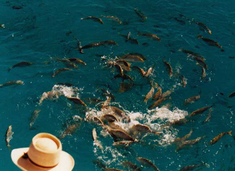 Australia 39 s great barrier reef photo gallery for Great barrier reef fish