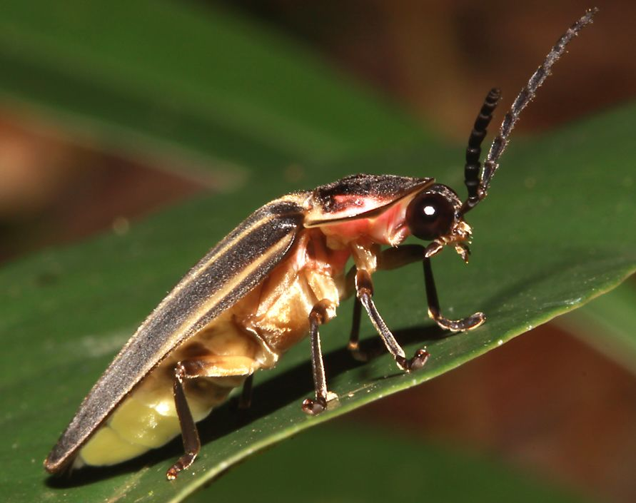Wildlife Of Belize