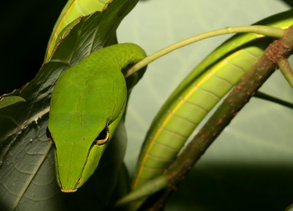 lizard live wallpaper