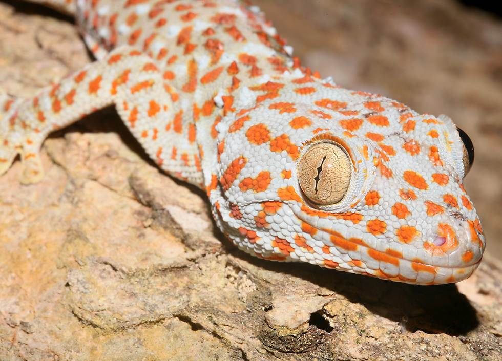 Gecko web browser click button dating 6