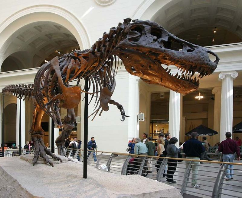 Sue the tyrannosaurus at the Field Museum