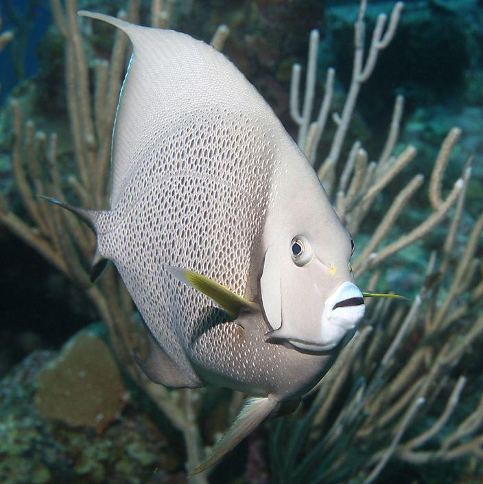 Underwater Highlights Of Belize