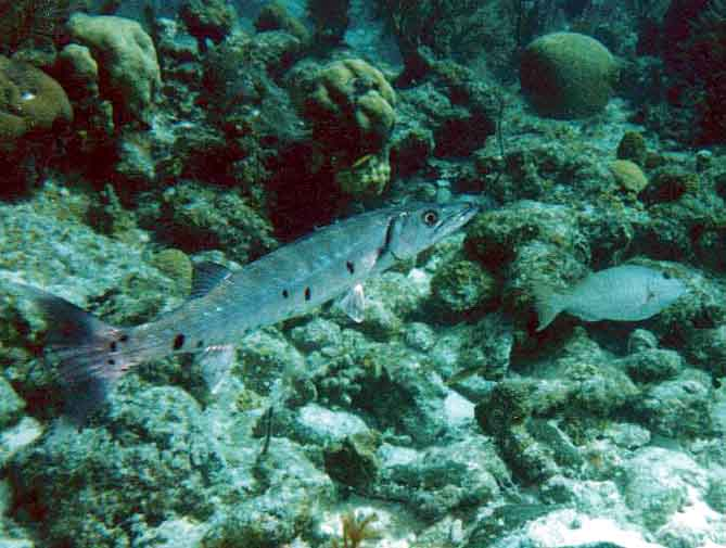 Fish You Might Not Want to Meet in Belize