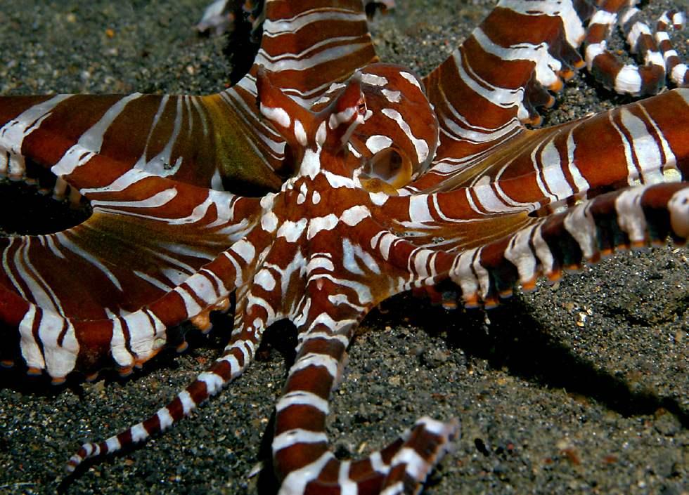 Underwater Wildlife of...