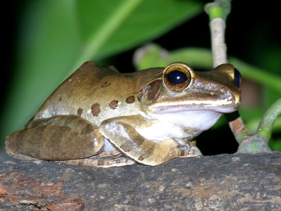 Wikipedia:WikiProject Amphibians and Reptiles