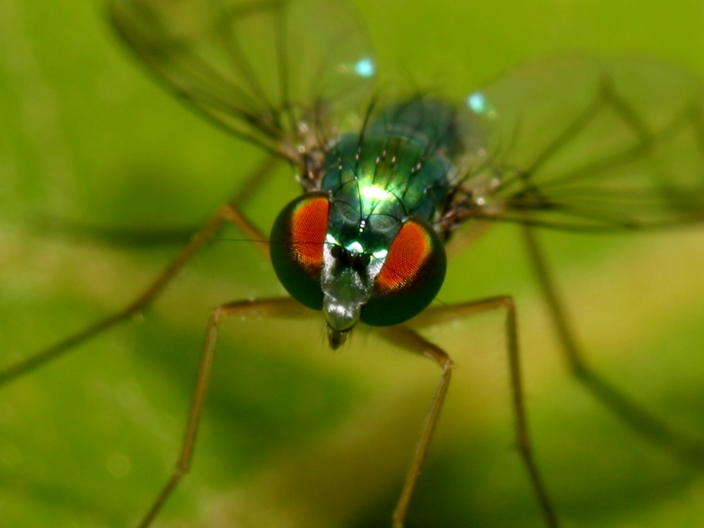 a fly The common housefly brings us gifts of disease without intentions of ever leaving so, what is the lifespan of a fly and how do you get rid of them.