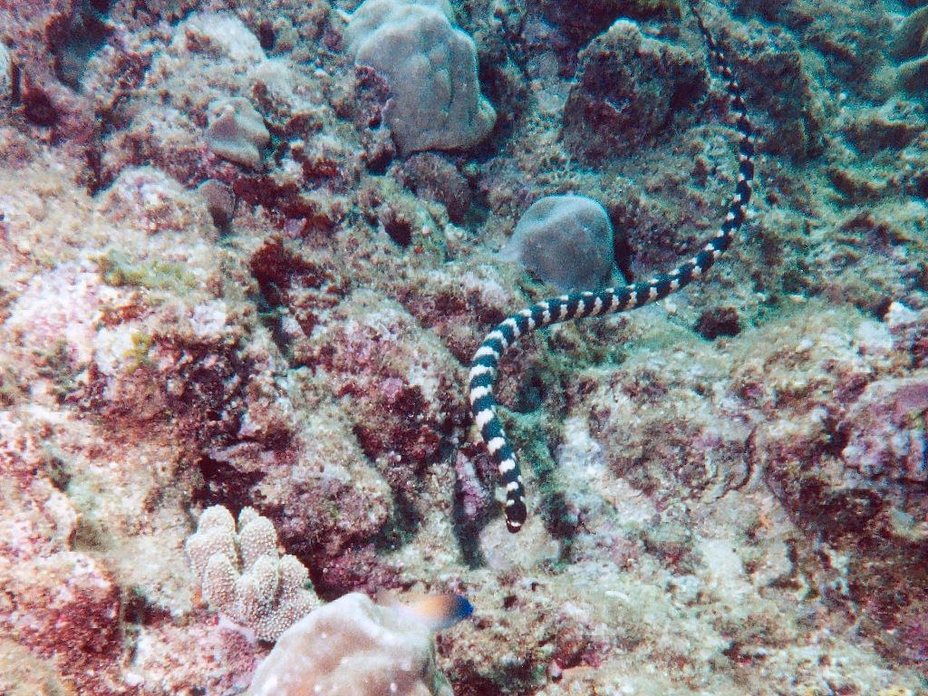 Giant underwater snake - photo#26