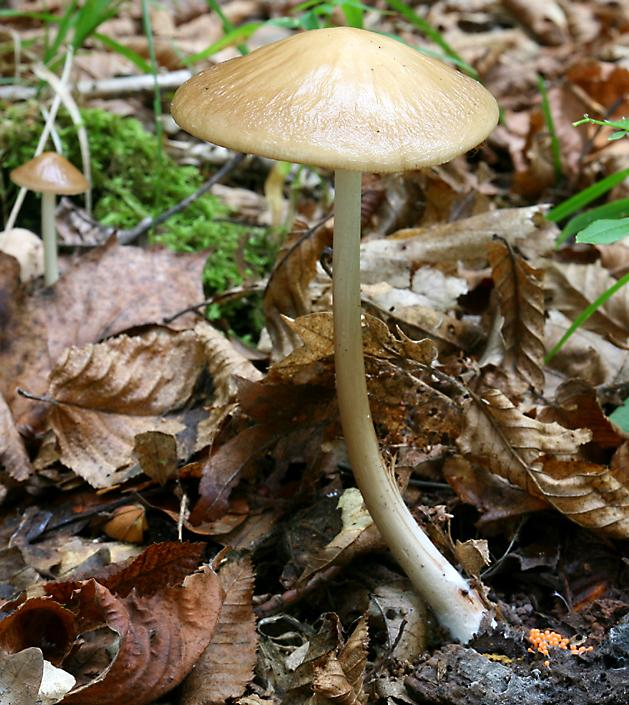 Fungi of the Czech Republic