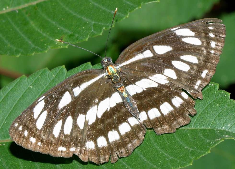 Vietnamese Butterflies