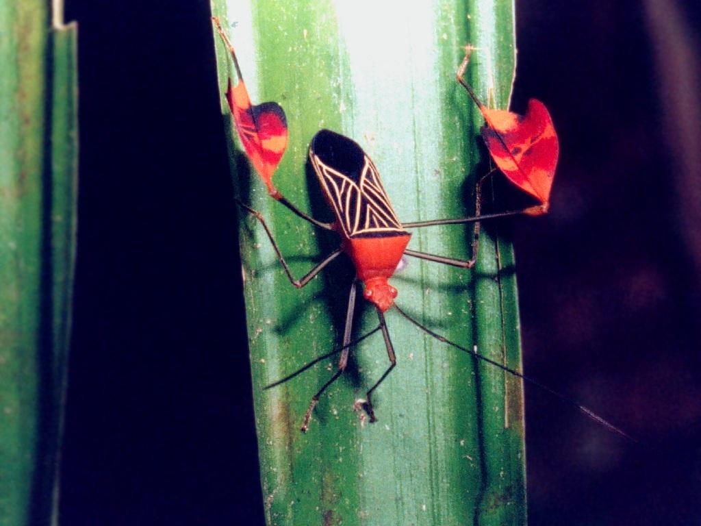 Flying Kiwi True Bug Photo Galleries